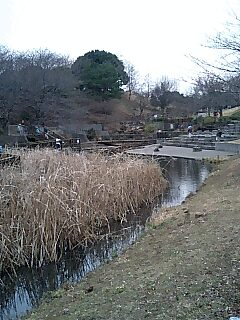 岸根公園篠原池にて