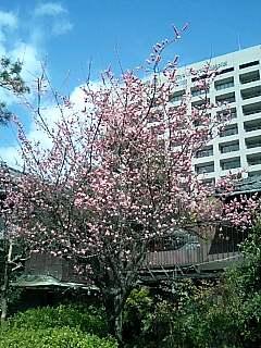 鶴舞公園の梅